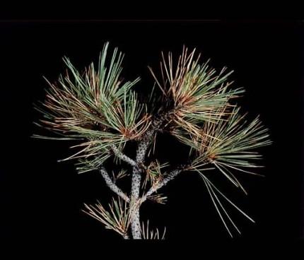 a-tree-copy